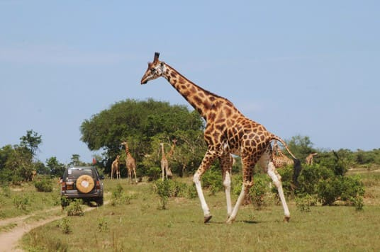 רשמים מהמסע הפורץ לאוגנדה