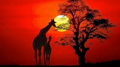 הטבע הפראי של אפריקה