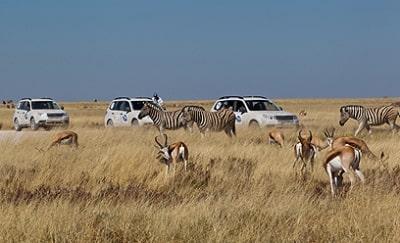אפריקה מזמינה אתכם לסרט טבע